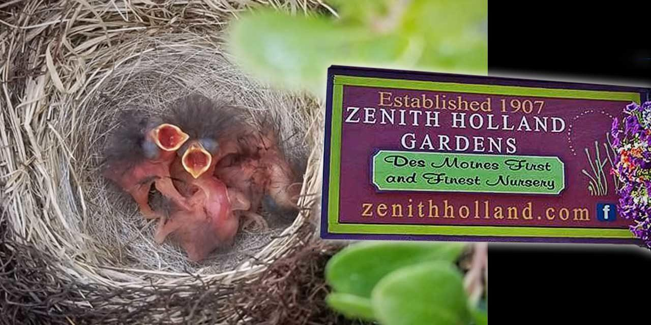 All kinds of Moms LOVE Zenith Holland Nursery, and lots of great new gift ideas are in!